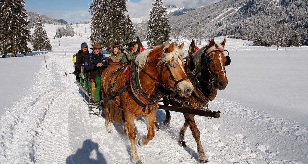 Obertauren horses