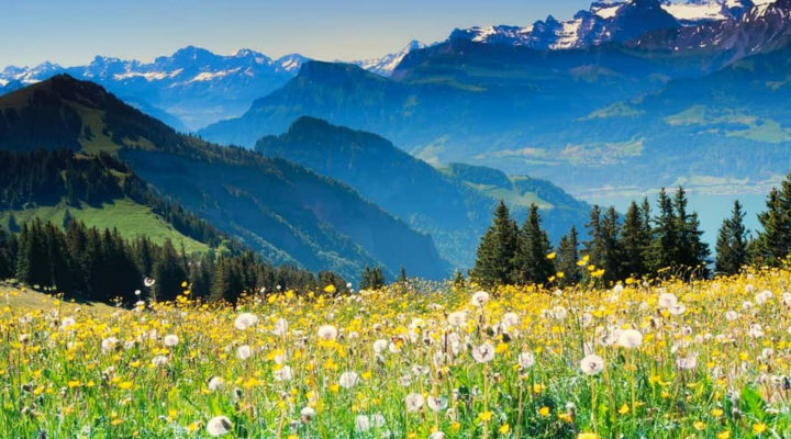A Travel-Addict's Handbook to the Swiss Alps in Summer