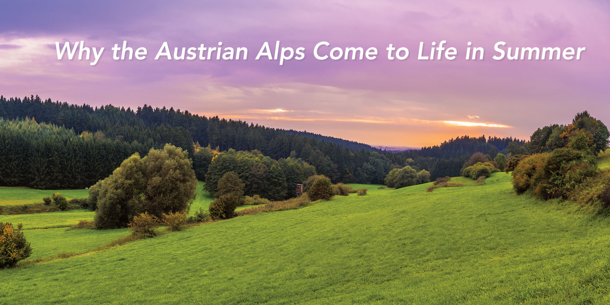 Large green fields and trees in Austrian Alps