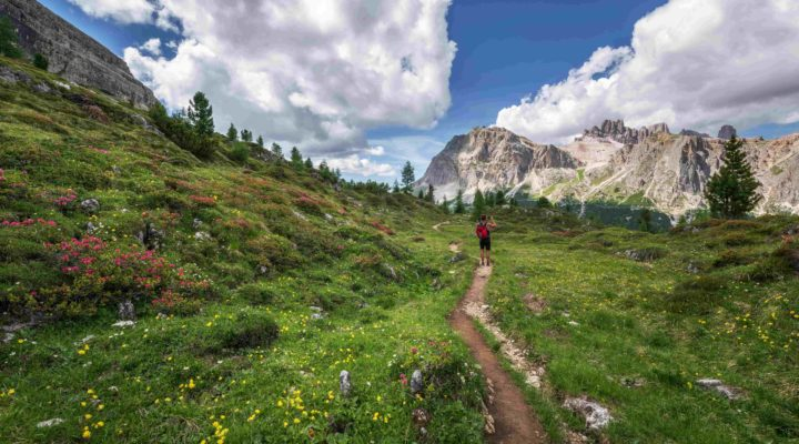 Hiking in alpine meadows